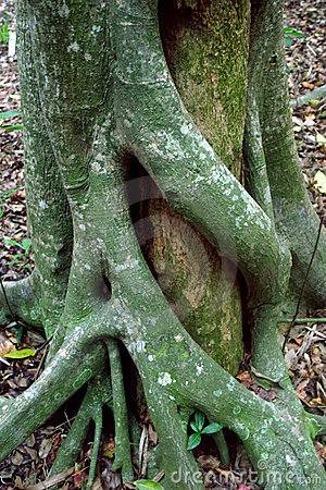 Arboral embrace (tree hugging)
