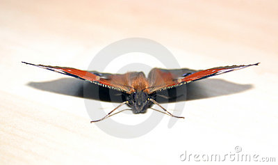 Sitting butterfly
