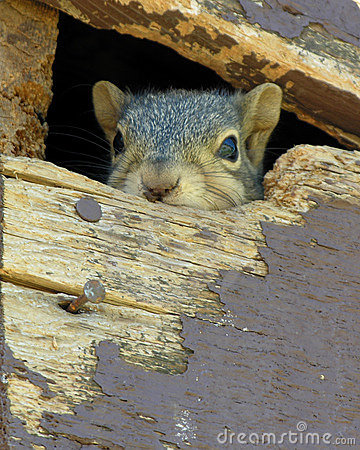 Squirrel's in the Attic