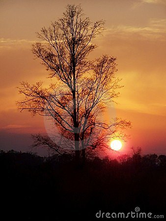 Golden tree sunset