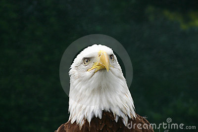 Eagle Thoughts