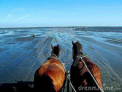 Horses and low tide