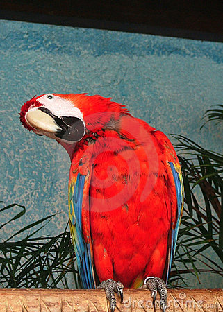 Parrot in cancun