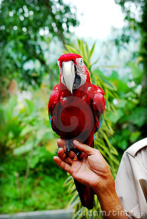 Hand holding Parrot