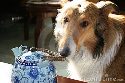Dog and tea pot