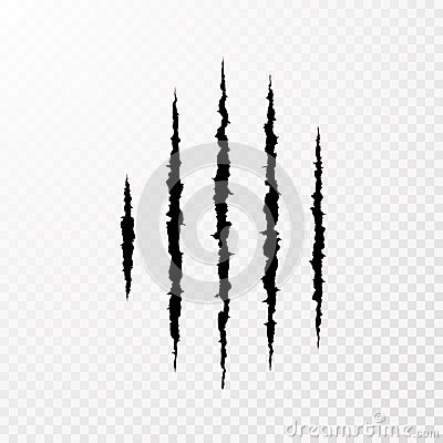 Traces from the claws of the monster. Claw scratch mark. Animal scratch on transparent background. Shred paper. Vector