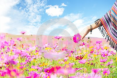 stock image of traveler asian women hand touch cosmos flower, freedom and relax in the flower farm,
