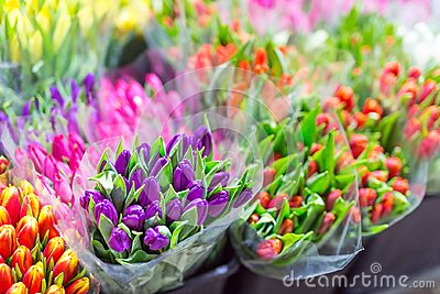 Lot of multicolored tulips bouquets. Flower market or store. Wholesale and retail flower shop. Florist service. Woman day
