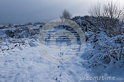 Fresh fallen, untouched snow in Northern Ireland