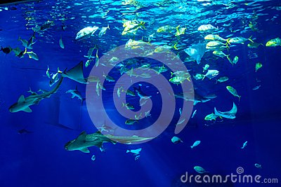Large scale sealife oceanarium with many species of underwater a