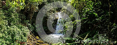 Jungle setting with Waterfall in Cloudbridge Nature Reserve, Costa Rica.