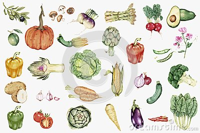 Illustrated hand drawn vegetable collection