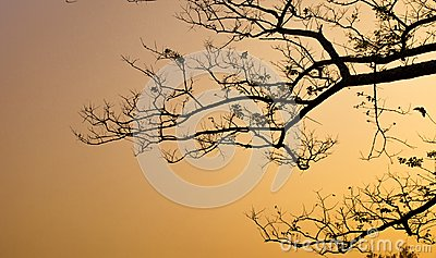 Tree branch silhouette