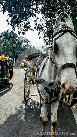 A horsecar and a auto on the road in India