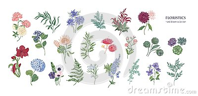 Collection of popular floristic flowers and decorative plants isolated on white background. Set of beautiful floral