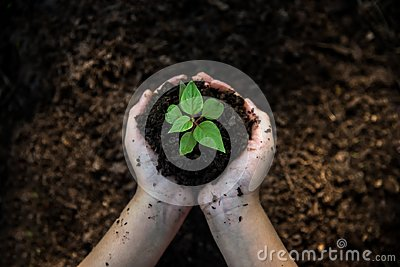 stock image of hands child holding young plants on the back soil in the nature park of growth of plant