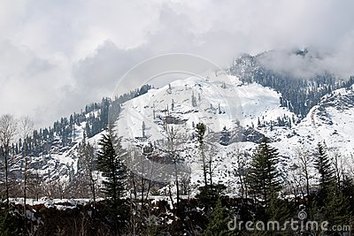 Mountain and tree of Manali Himachal Pradesh Town in India