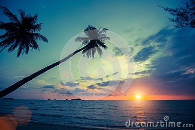 Palm trees silhouettes on tropical beach during sunset. Nature.