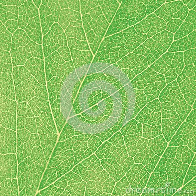 Green Leaf Macro Textured Closeup Large Detailed Abstract Background Texture Pattern Detail