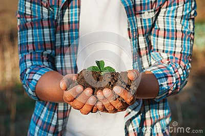 Man farmer holding young plant in hands against spring background. Earth day Ecology concept. Close up selective focus on Person h