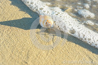 Beautiful White Beige Spiral Sea Shell on Beach Sand Washed by Foamy Wave. Transparent Water. Golden Sunlight Soft Pastel Colors