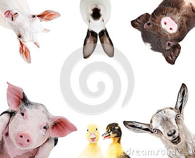 Funny portrait of a group of farm animals