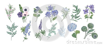 Bundle of detailed drawings of beautiful floristic flowers and decorative herbs isolated on white background. Set of