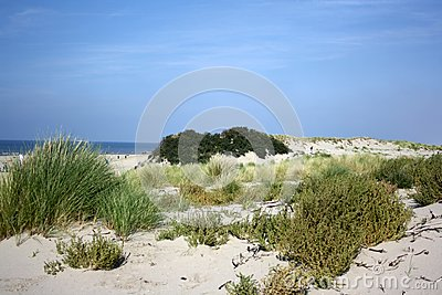 Sanddunes in the Netherlands