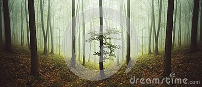 Surreal symmetrical forest with fog