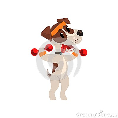 Cute jack russell terrier athlete exercisng with dumbbells, funny sportive pet dog character doing sports vector