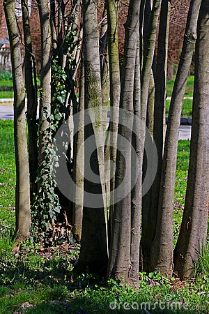 Green grass on grunge tree backgroundn texture, raw, wood