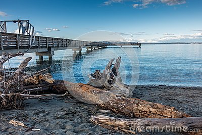 Driftwood And Pier