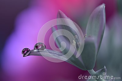 Beautiful Nature Background.Artistic Violet Wallpaper.Natural Macro Photography.Spring,white flowers.Floral Art.Purity,water,light