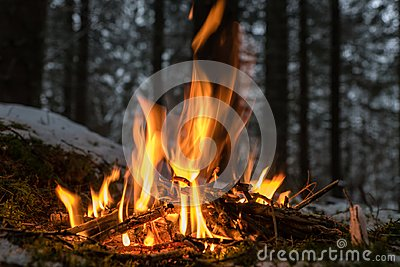 Small fire place in the forest