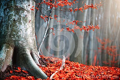 Autumn nature scene. Fantasy fall landscape. Beautiful autumnal park with red leaves and old trees