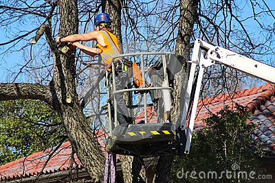 Tree surgeon with helmet and full equipment on cherry picker sawing limb off of a tree in front of tile roof and blue sky Tulsa Ok