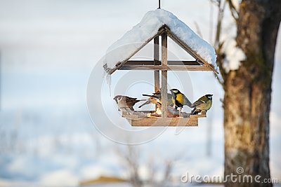 Five birds in the feeder