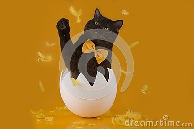 Easter chocolate cat hatched from egg on yellow backgro