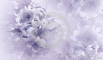 Soft light violet-blue floral background. Flowers of a cherry on a pink-white halftone background. Close-up. Greeting card.