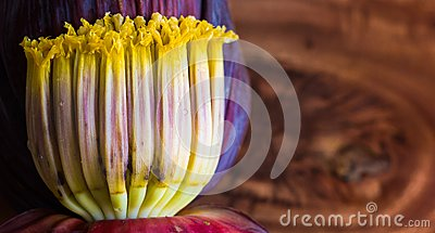 Close up macro of banana blossom mocha, flowers of unripe banana in wooden background with copy space for text.
