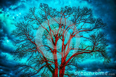 Bare tree, dramatic cloudy sky