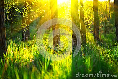 Spring nature. Beautiful landscape. Park with green grass and trees