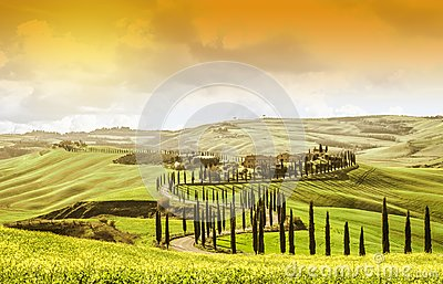IDYLLIC TUSCANY LANDSCAPE WITH CYPRESS TREES. TOP ATTRACTION IN ITALY. FAMOUS TRIP DESTINATION