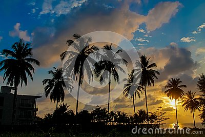 Sunset silhouette of palm trees in tropics