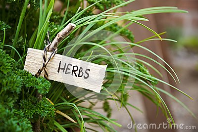Parsley and society garlic with a marker labled herbs, garden co