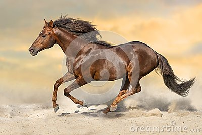 Red stallion gallops