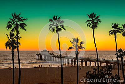 Palm trees and Pier on Manhattan Beach at sunset in California, Los Angeles.