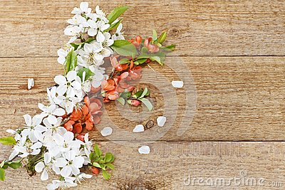 Close-up photo of Beautiful white Flowering Cherry Tree branches. Wedding, engagement or betrothal concept on vintage wooden backg