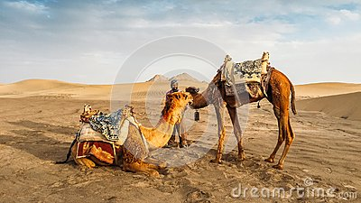 Yazd, Iran - April 25, 2018: Local Iranian man next to two camels in Yazd, Iran