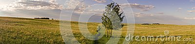 Wide Panoramic Landscape and Isolated Tree Nose Hill Park Prairie Grass Alberta Foothills